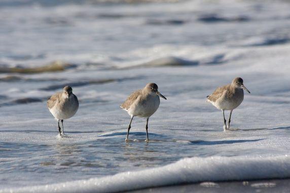 Sortie : les oiseaux de la baie