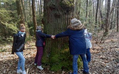 Course d'orientation au bois de plédran