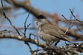 sortie chants d'oiseaux et quiz